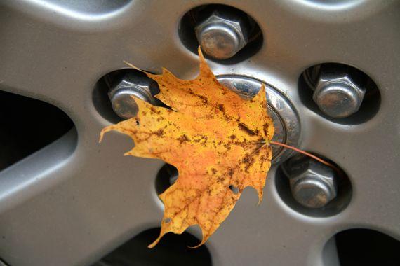 Autumn leaf on wheel
