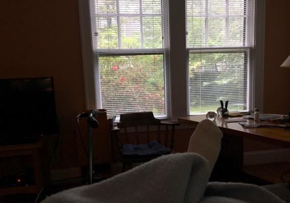 Azaleas window