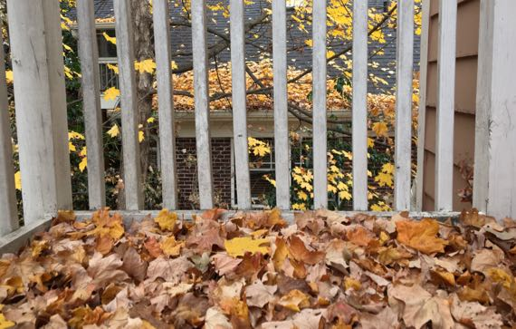 Balcony leaves