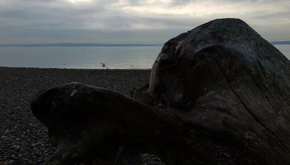 Beach birds stump