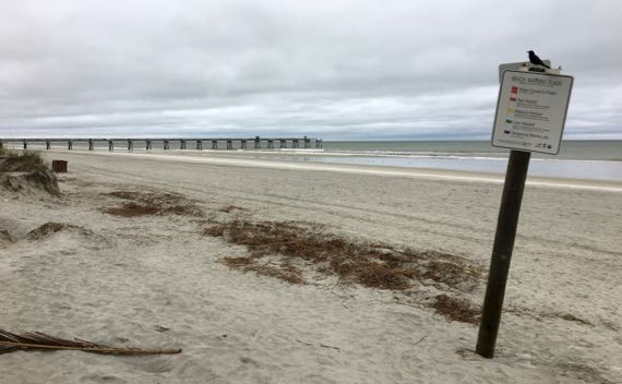 Beach pier grackle