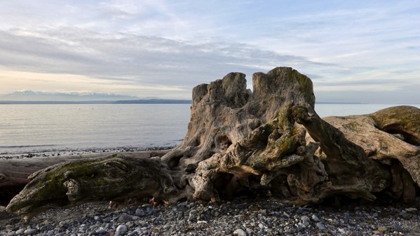 Beach stump