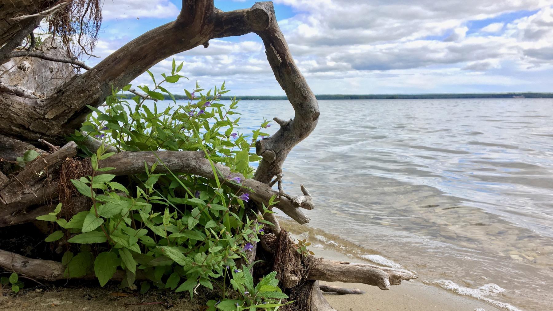 Beach tree lake