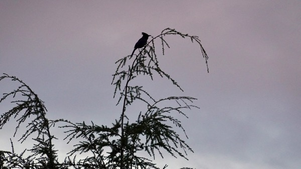Bird in treetop