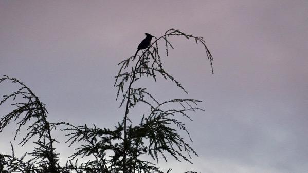 Bird in treetop