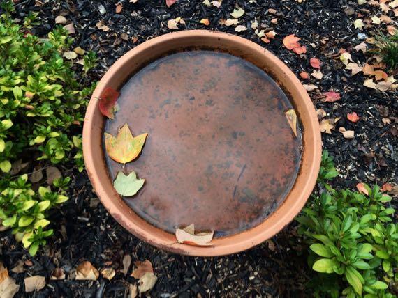 Birdbath leaves