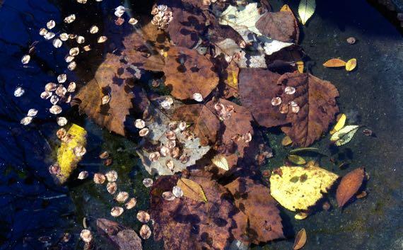 Birdbath of leaves