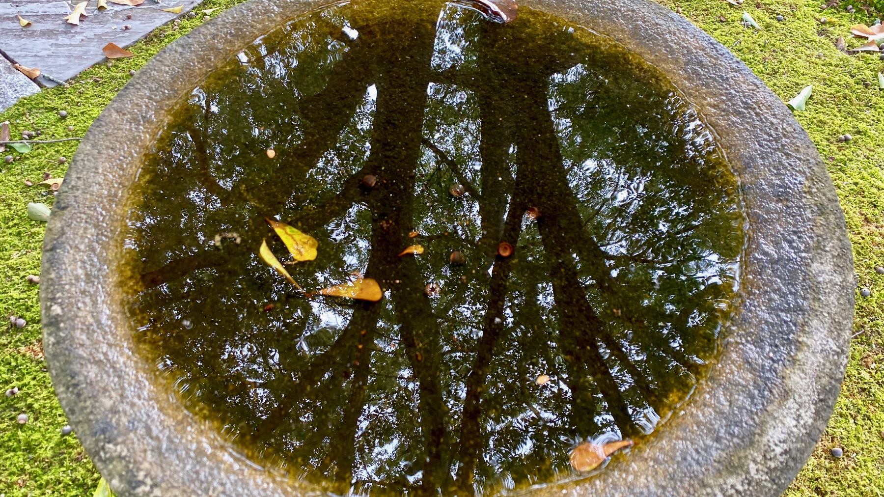 Birdbath reflection