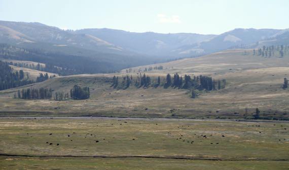 Bison valley