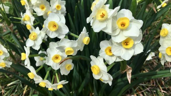 Bloomin bulbs