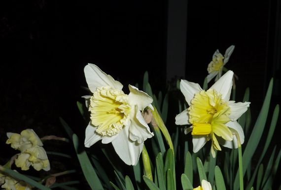 Bloomin bulbs 11 Mar 01