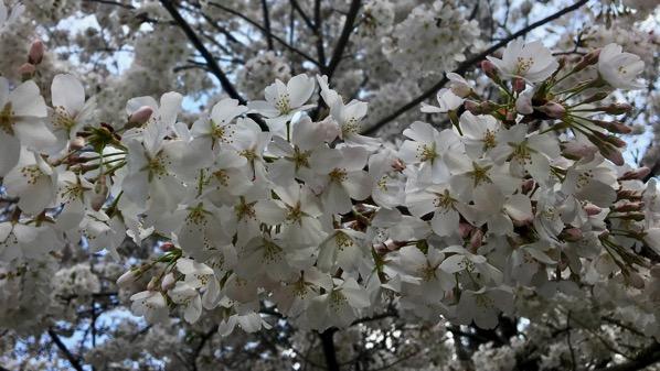 Bloomin tree