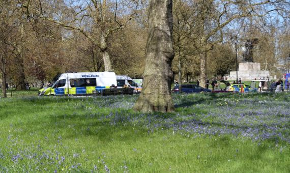 Bluebell meadow HydePark