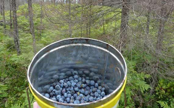 blueberry_ridgelet.jpg