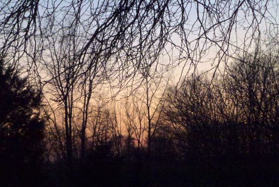 Branches trees sunset glow light