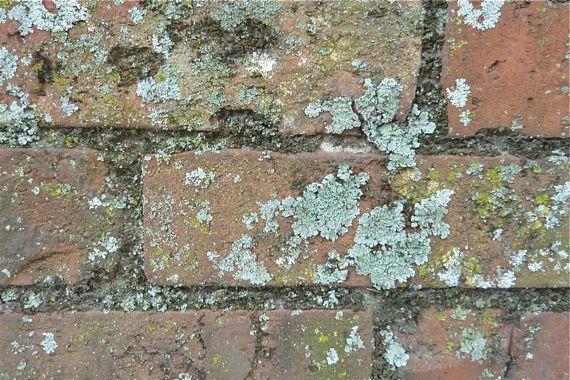 brick_n_lichen.jpg