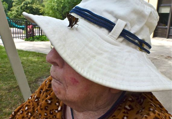 Butterfly comes to visit on hat