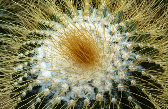 cactus_de_conservatory_C_ATL.jpg