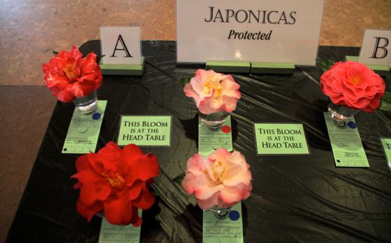 Camellia show head table