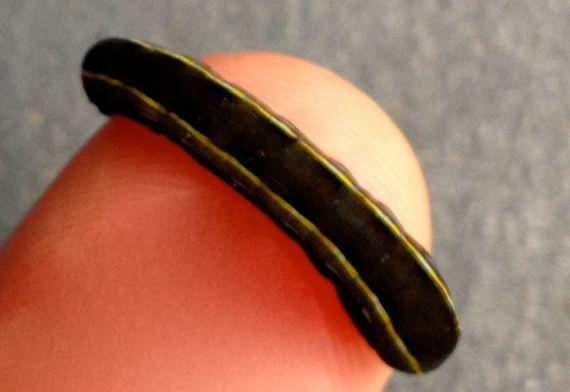 Carbon caterpillar posing