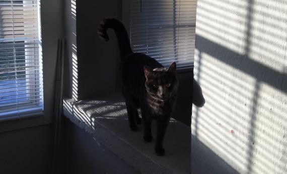 Cat in sun w shadows