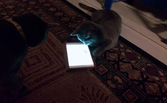 Cats ipad