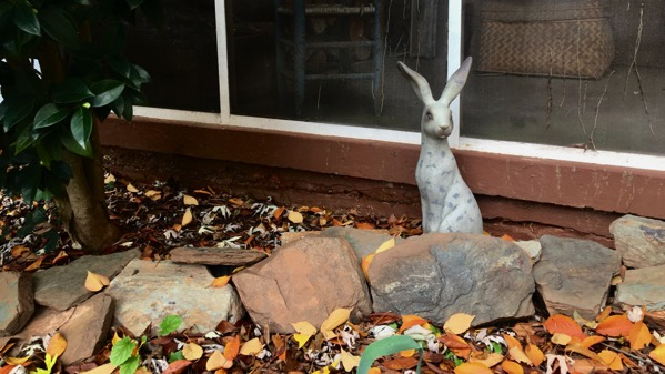 Cement hare
