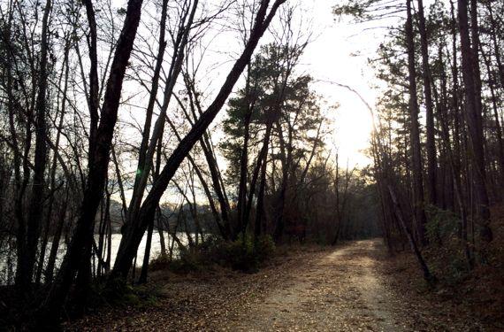 Chatt trail dusky