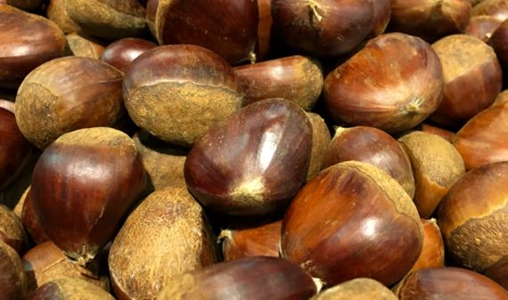 Chestnuts from China
