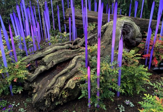 Chihuly purple spikes n rotting tree