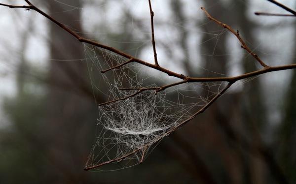 Cobweb in fading fog