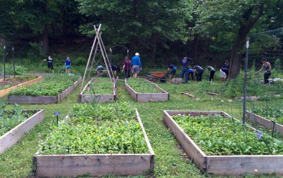 Community garden prepping