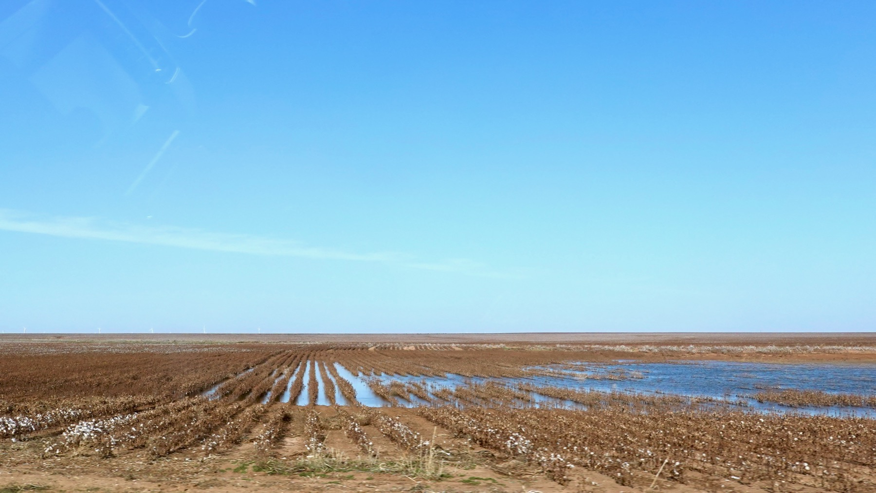 Cotton rows flooded