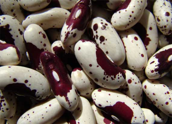 cranberry_beans.jpg