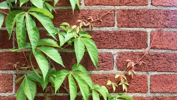 Creeper brick pattern