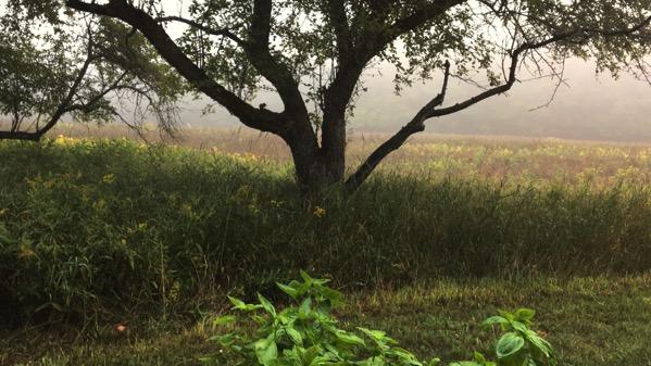 Critter fog
