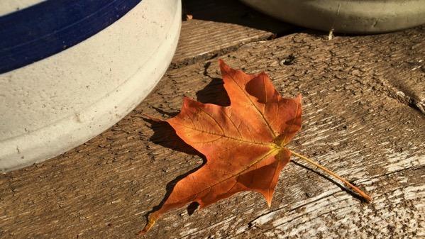 Crocks leaf
