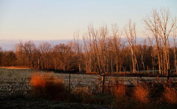 Dawn light oblique field