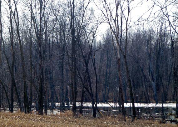 Decaying ice rim on pondlet