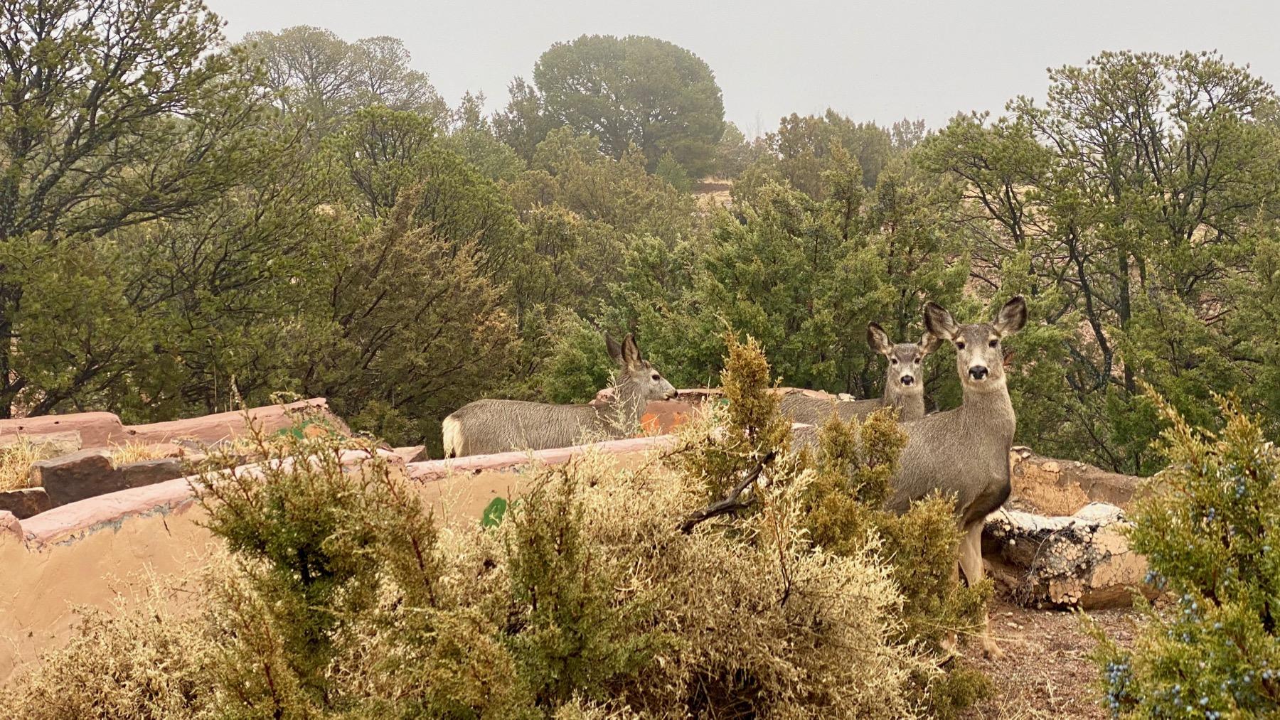 Deer marcy hill