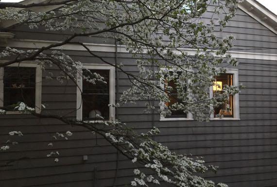Dogwood n four windows