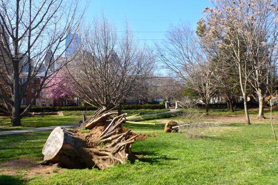 Down stump new tree