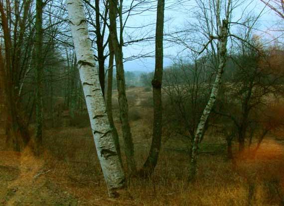 dusk_view.jpg