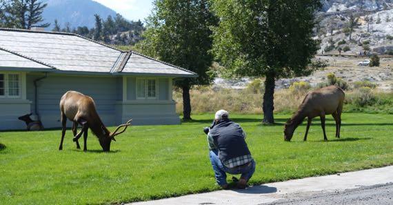 Elk lunch