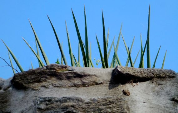 Exposition planter w succulent