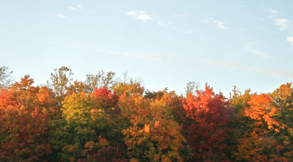 Fall color in N lower penin