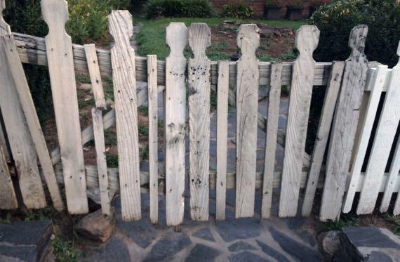 Fence posing