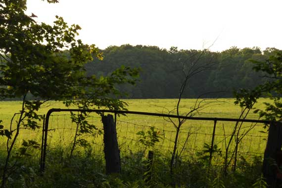 field_woods_view_dusk.jpg
