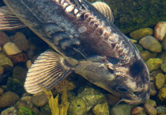 fish_garden.jpg