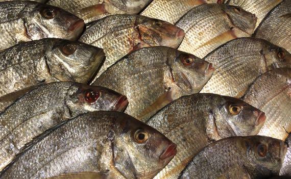 Fish display BHFM